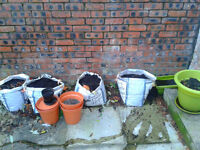*FREE * Bags of compost and flower pots (various shapes and sizes)