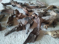 Large amount of fish tank bogwood mopani wood