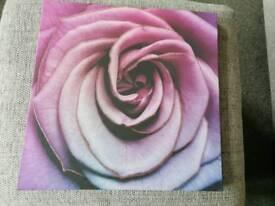 Purple rose flower canvas 40 cm x 40 cm