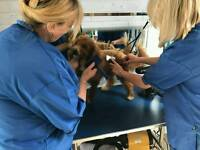 PAWS TO PERFECTION Dog Groomer