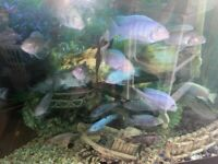 Large Fish Tank including fish