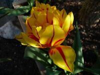 lees gardening services