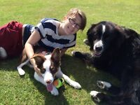 Reliable dog walker with 2+ years experience