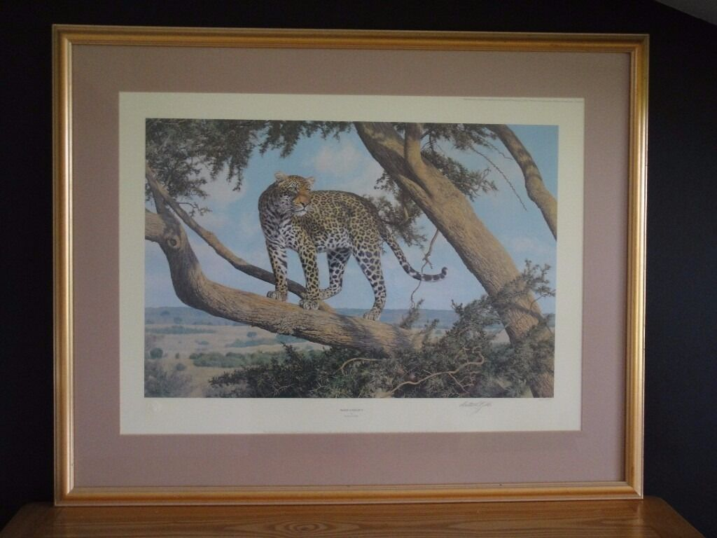 Mara Outlook signed by Anthony Gibbsa female leopard looking into the Mara late in the afternoonin Henleaze, BristolGumtree - A female leopard looking into the Mara late in the afternoon. Signed limited edition of 1,000 prints, number 406 / 1000 The image size is 22.5 inches x 15 inches (57 cm x 38 cm). The frame size is 32.5 inches x 26 inches (82 cm x 66 cm). Anthony...