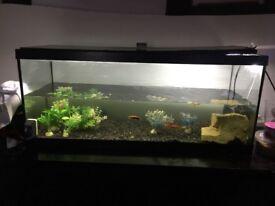 3 foot Fishtank