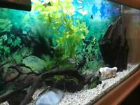 Topical fish entire tank contents for sale (not tank)