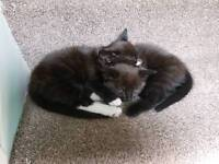2 x kittens