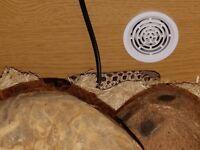 Hognose snake and 2 ft vivarium