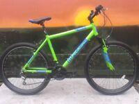 Falcon Merlin Mens Alloy HT Mountain Bike Green - RRP £279