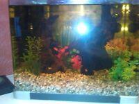 25ltr glass aquarium