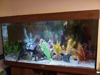 £00 Litre Aquarium with Wooden Cabinet