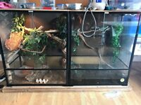 Chinese water dragons and setup