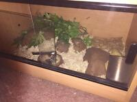 2 reptile vivariums and bits