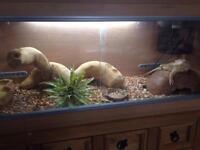Aquarium full set up with Dragon