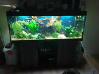 rio 400 fish tank with all equipment you need to run this set up including live stock