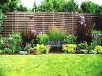 Free - small gardening jobs