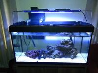 Marine Aquarium for sale