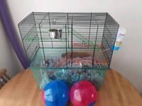 2 gerbils for sale