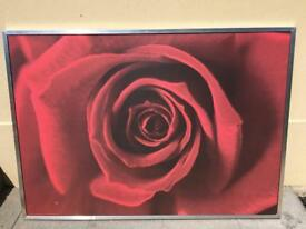 "Large framed picture red rose 55""x40"""
