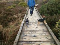 Dog walking / dog sitting in Tandragee / Gilford/ Scarva & neighbouring ABC areas