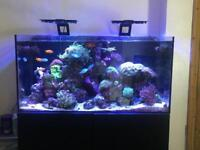 4th Evolution Aqua Reef Tank FULL SET UP