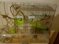 Male mice x3 with cage