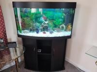 Juwel curved front 180 Litres aquarium