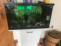 Fish tank for sale(fish included)