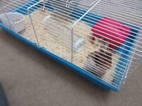 Hamster with Cage £30 o.n.o