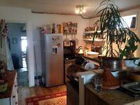Large en suite room in friendly Haringey Flatshare