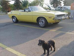 WANTED- early history/photos 71 DODGE Challenger
