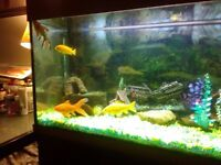 Very large fish tank with fish and contents