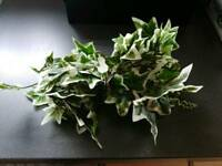 Fake ivy