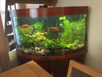 Tropical aquarium - well established