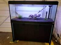 Fluval fish for sale