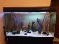 REDUCED 4ft aquarium