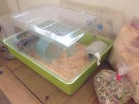 2 Russian Hamsters