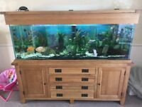 6' Tropical Fish tank full set up
