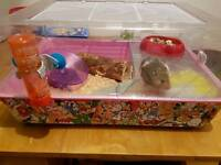 Hamster and full set up loads of extras