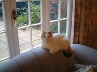 MISSING CAT Sophie has not been seen since 1am on Saturday 9 July in the Ealing area.