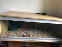 Large Vivarium With Heat Lamp and Thermostat.