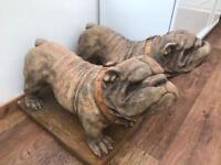 English bulldog garden statues