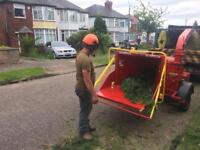 Tree surgery / Landscaping