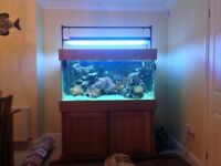 4ft Aquarium and equipment (Tank Shutdown)