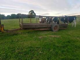 15ft cattle feed trailer ideal for cattle with horns highland cattle etc tractor