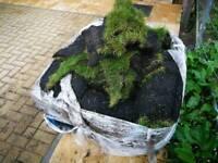 Grass Turf - £1 A roll