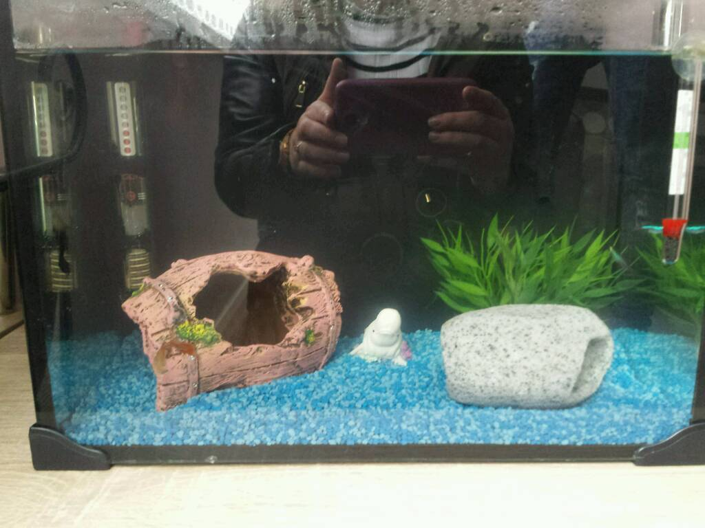 Small tropical tank