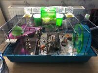 Female Syrian Hamster + Savic Hamster Heaven Cage + More