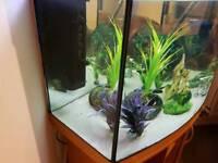 juwel fish tank 120l