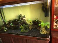 Panoramic Fish Tank